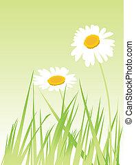 Flower - a pretty flower in the field in spring