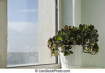 Flower in a plot near the glass window