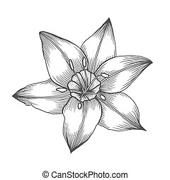 flower in a vintage style - Lily Flower , line pattern....