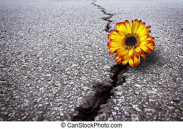 Beautiful flower growing on crack in old asphalt pavement