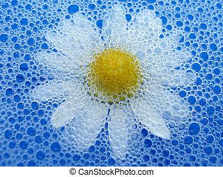 Flower in foam - Close-up of summer flower floating in blue...