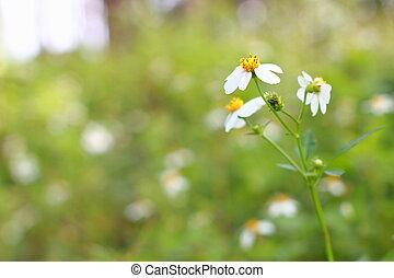 Flower in garden at sunny summer