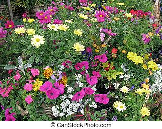 Flower in garden center - multicolored flowers in baskets...