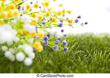 Flower in grass, isolated on white.