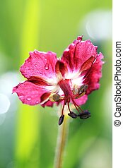 Flower in grass
