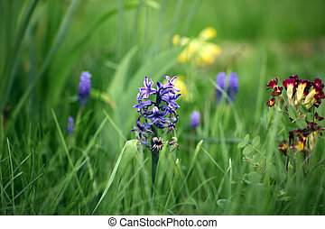 flower in green grass