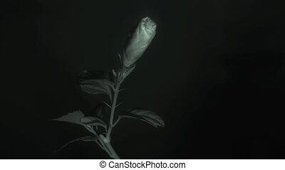 Flower in infrared light