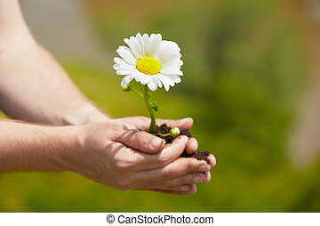 Flower in palm - Man is holding a green young plant - spring