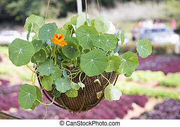flower in pot for decoration