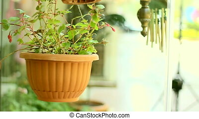 Flower in pot hanged at the door of flower shop and...