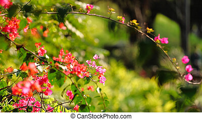 flower in spring time