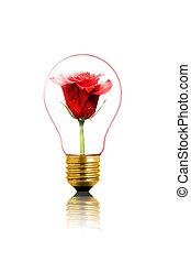 flower in the bulb