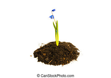 Flower in the ground turf on a white background