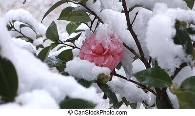 flower in the snow