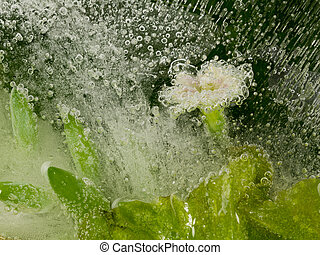 flower in the water and bubbles