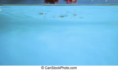 Flower in transparent water on a blue background