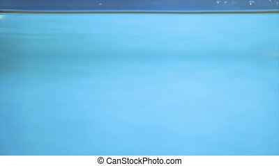 Flower in transparent water on a blue background - Bordeaux...