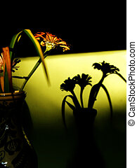 Flower in vase & Shadow on wall