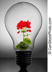 Flower inside light bulb