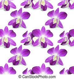Flower isolated on white pattern background seamless design