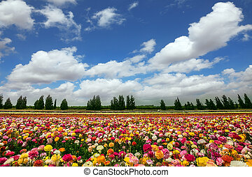 Flower kibbutz near Gaza Strip - Flower kibbutz on the...