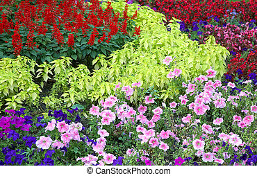 flower landscaping - Blossoming colorful flowerbeds in...