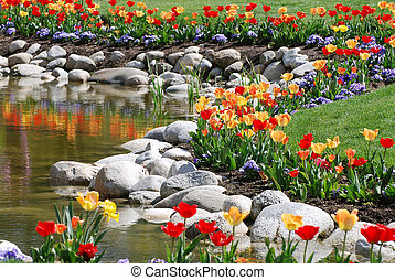 Winding rock and tulip border between pond and lawn.