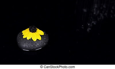 Flower laying on a black stone in the rain.