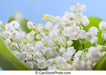 Flower lily of the valley