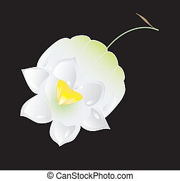 Flower lily of the valley, vector