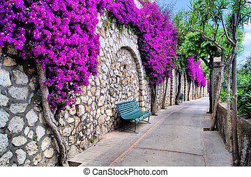 Flower lined path - Vibrant flower draped pathway in Capri,...