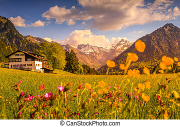 Flower meadow with snow covered mountains and traditional house in Sunset or Sunrise. Bavaria, Alps, Allgau, Oberstdorf, Germany.