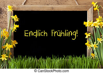 Flower Narcissus, Chalkboard, Endlich Fruehling Means Hello Spring