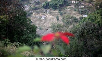 Flower. Nepal. Mountains.