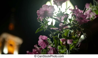 Flower night city light - Close up shot of a flower and a...