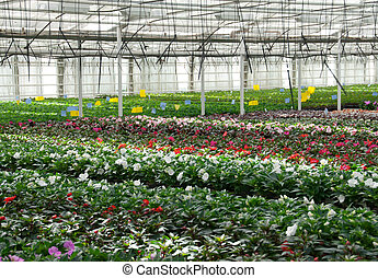 Flower nursery in Europe. Greenhouse with cultivated plants and flowers.