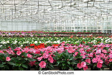 Greenhouse with large variety of cultivated flowers.