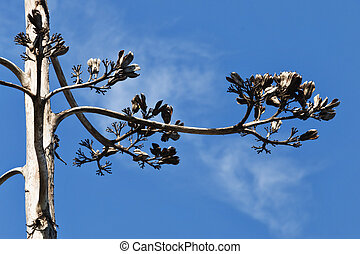 Flower of agave