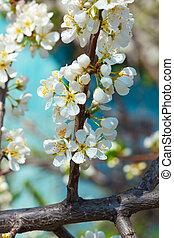 flower of apple tree over blue sky