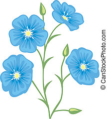 Flower of flax (Linum usitatissimum)