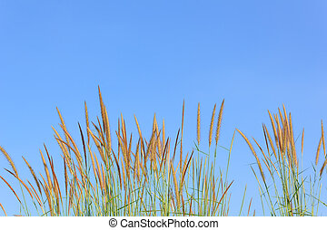 Flower of grass with blue sky
