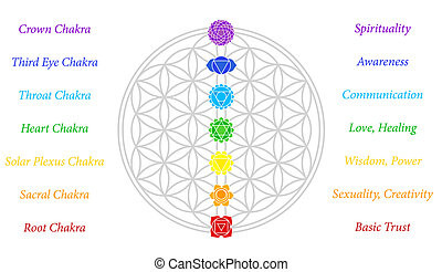 The seven main chakras and their meanings, which match perfectly onto the junctions of the Flower-of-Life-Symbol - white background.