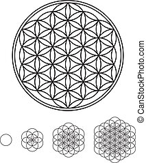 Flower Of Life Development - development of Flower of Life...