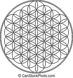 Flower of life geometry vector illustration