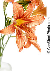 flower of lily