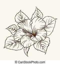 Flower of mallow. - Flower of mallow on a white background. ...