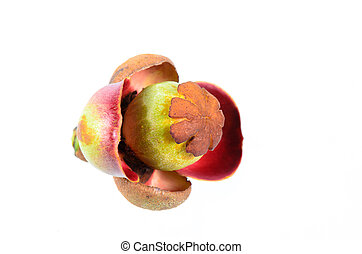Flower of mangosteen on white background