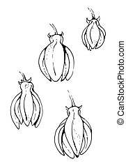 Flower of Ylang Ylang, vector illustration