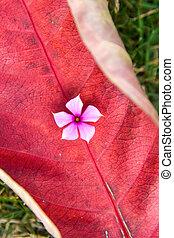 flower on a red leaf