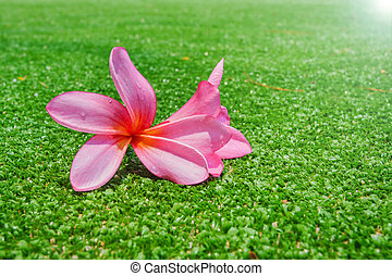 Flower on green grass